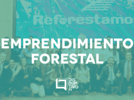 Emprendimiento forestal
